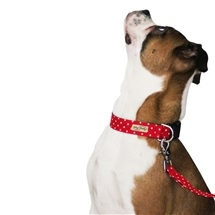 Matching Dog Collar & Lead Set